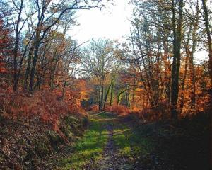 Vall�e du Scorff Le Jardin d'�rables Hello Isabelle Bern�