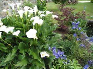 Le jardin d 39 erables - Le jardin d erables ...